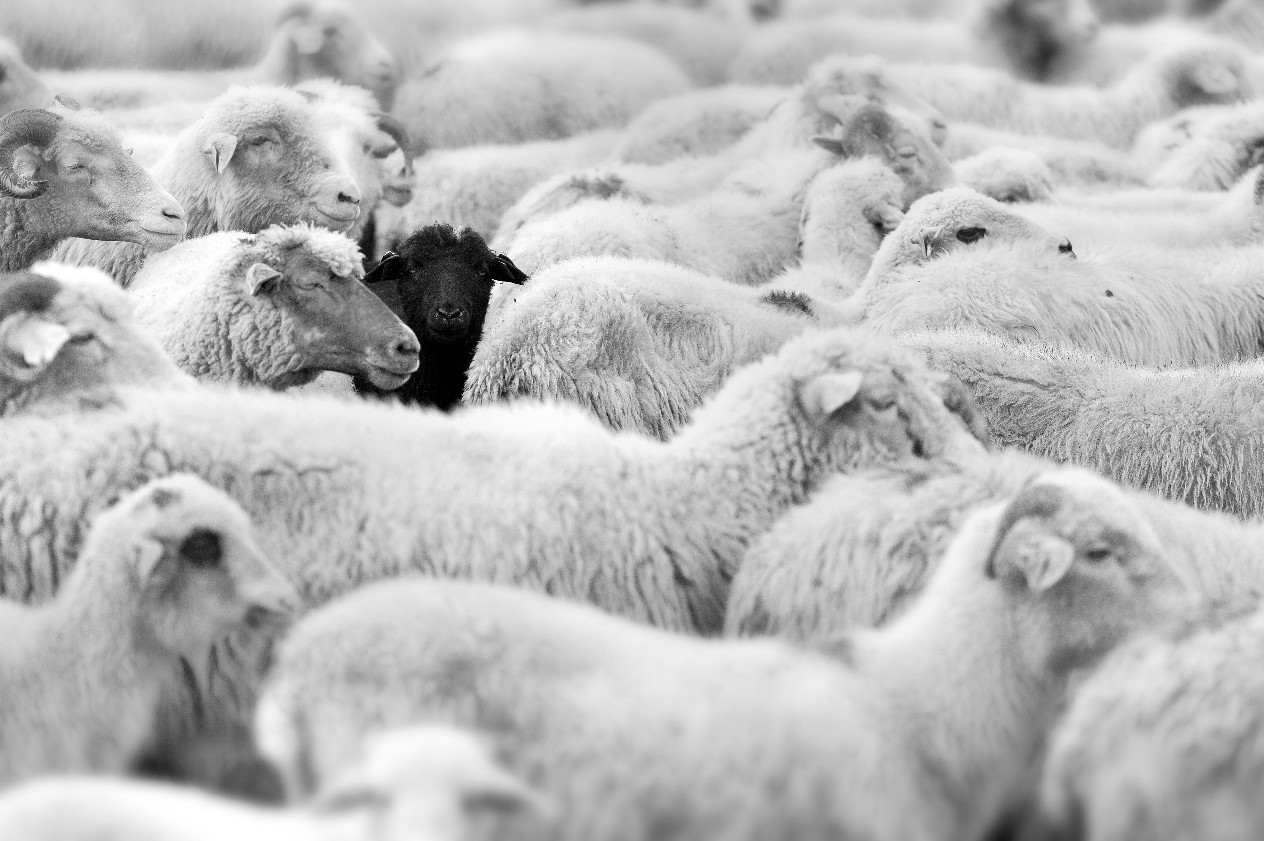 exception black sheep